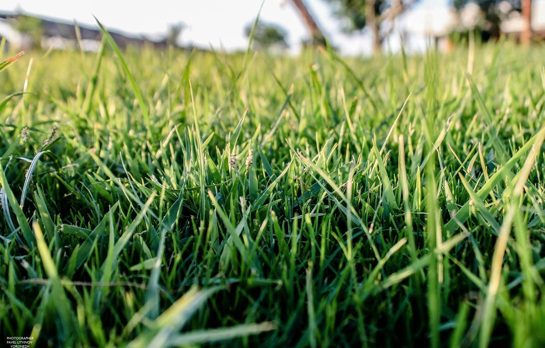 hương cây cỏ tự nhiên.