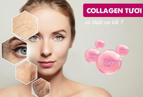 Collagen tươi